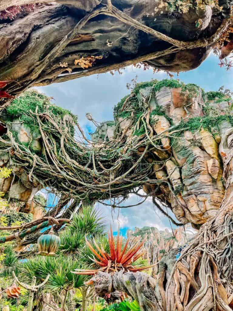 pandora animal kingdom at Disneyworld