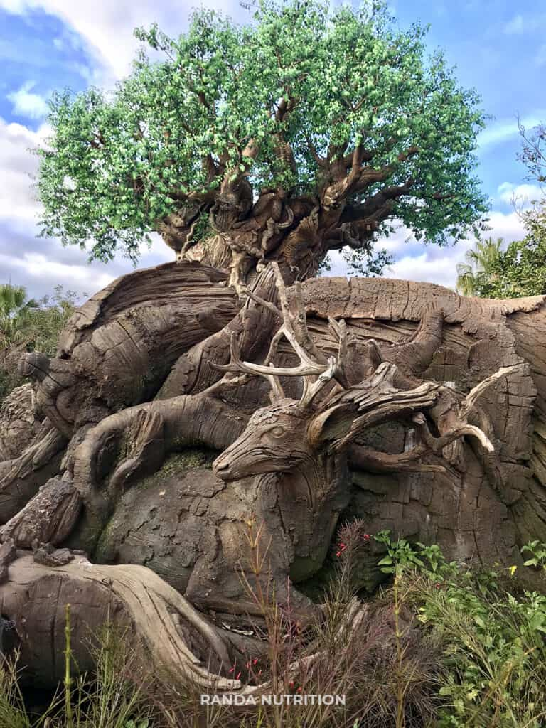animal details on the tree of life at discovery island